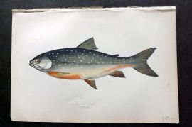 Couch 1877 Antique Fish Print. Alpine Char 226